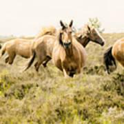 Spirit Of The Horse Art Print