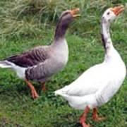 Spirited Geese Art Print
