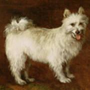Spitz Dog Art Print by Thomas Gainsborough