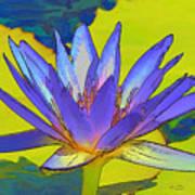 Splendid Water Lily Art Print