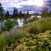 Spokane River Wildflowers Art Print