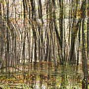 Spooky Woods Art Print