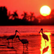 Spoonbills At Sunset Art Print