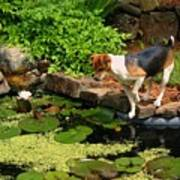 Sporty At The Lily Pond Art Print