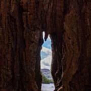 Spot The Lake Shore View Through The Hollow Tree Trunk Art Print