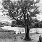 Spot The Woman And Her Dog- Behind The Tree Art Print