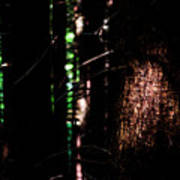 Spotlight In The Woods Art Print