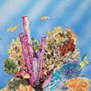 Spotlight Parrotfish Art Print