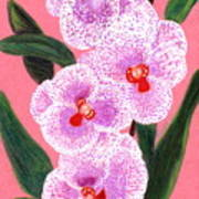 Spotted Orchid Against A Pink Wall Art Print