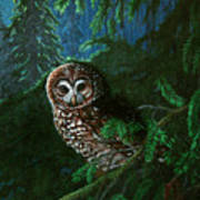 Spotted Owl In Ancient Forest Art Print