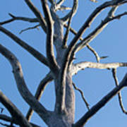Sprawling Dead Tree Art Print
