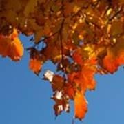 Spray Of Autumn Leaves  Art Print