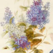 Spray Of Lilac Art Print