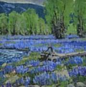 Spread Creek Lupine Art Print
