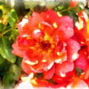 Spread Petals Of A Red Rose Art Print