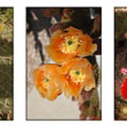 Spring - Desert Style Art Print