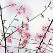 Spring Awakening Art Print by Eena Bo