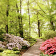 Spring Azaleas  Art Print