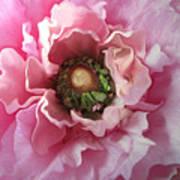 Spring Beauty Art Print