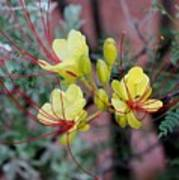Spring Blooms Yellow Red 052814a Art Print