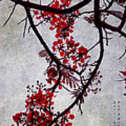 Spring Bloosom In Maldives. Flamboyant Tree II. Japanese Style Art Print