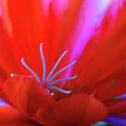 Spring Blossom 8 Art Print