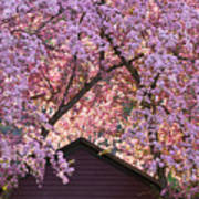 Spring Blossom Canopy Art Print