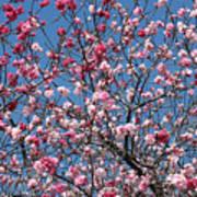 Spring Blossoms Against Blue Sky Art Print
