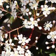 Spring Blossoms Macro Art Print