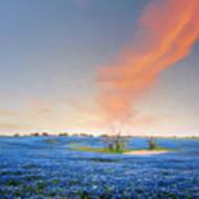 Spring Bluebonnets In Texas Art Print