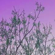 Spring Branches Lavender Art Print