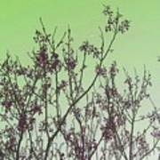 Spring Branches Mint Art Print