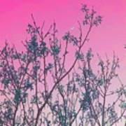 Spring Branches Rose Art Print