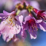 Spring Burst Art Print