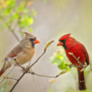 Spring Cardinals Art Print by Bonnie Barry