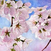 Spring- Cherry Blossom Art Print