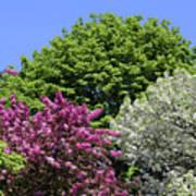 Spring Color 2 051818 Art Print