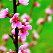 Spring Color Art Print