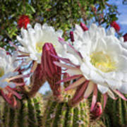Spring Easter Cactus Blooms 789 Art Print