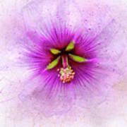 Spring Flower Frill Art Print