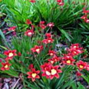 Spring Flowers Print by Joyce Woodhouse