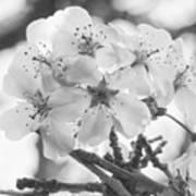 Spring Flowers - White Art Print