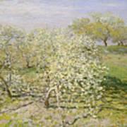 Spring. Fruit Trees In Bloom Art Print