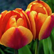 Spring Garden - Act One Art Print