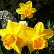 Spring Gold Art Print