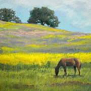 Spring Hill Grazing Art Print