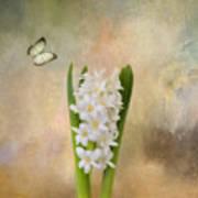 Spring Hyacinth Art Print
