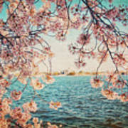 Spring In Dc Art Print