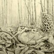 Spring In Ohio Art Print