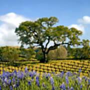 Spring In The Vineyard Art Print